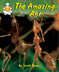 Story Box, (Level J) The Amazing Ant