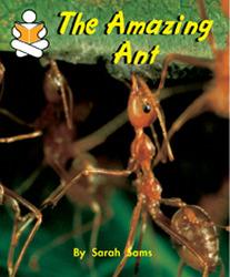 Story Box, (Level J) The Amazing Ant