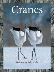 Take Two, Cranes, Level M, Big Book