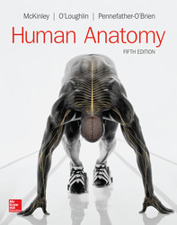 Soft Bound Version for Human Anatomy