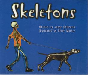 Storyteller, (Level E) Skeletons 6-pack