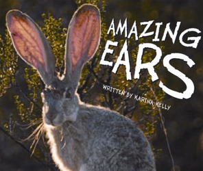 Gear Up, (Level I) Amazing Ears, 6-pack