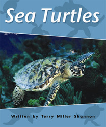 Gear Up, (Level I) Sea Turtles, 6-pack