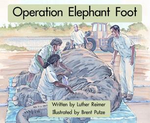 Springboard, Operation Elephant Foot (Level G) 6-pack