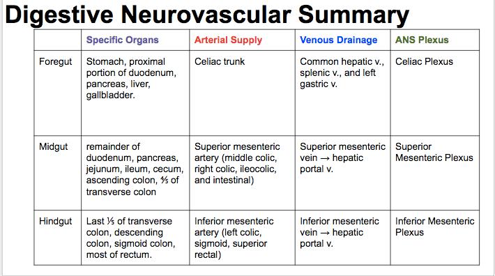 digestive-neurovascular-summary