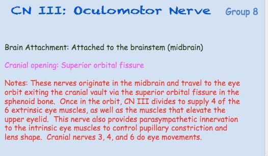 cnIII-oculomotor-nerve-1